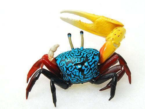 Fiddler Crab: Fish & Aquariums | eBay