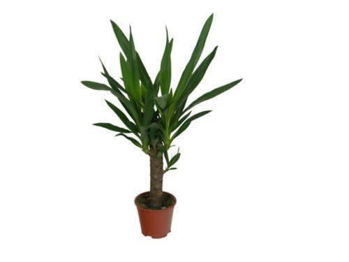 tropical house plant identification, bamboo house plant identification, ivy house plant identification, on palm tree rubber plant house identification