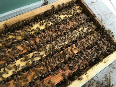 Live Bee Nuc Hives