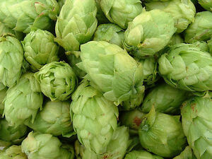 Willamette and Cascade Hop plants for sale