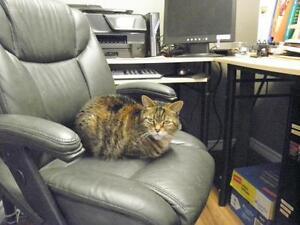 "Adult Female Cat - Domestic Short Hair: ""Franny"" Oakville / Halton Region Toronto (GTA) image 2"