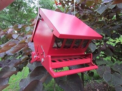 Mini Red Squirrel (Absolute II Mini Squirrel Proof Bird Feeders Red Heritage Farms 7458 )