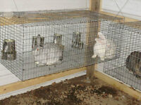Rabbit Cages ***WANTED***  =:-)