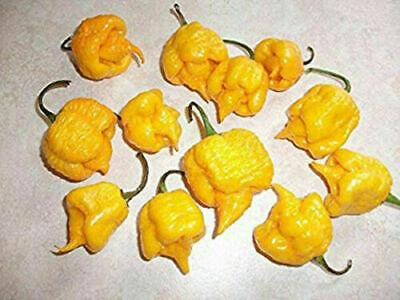 CAROLINA REAPER YELLOW, 30 semi peperoncino super piccante + OMAGGIO