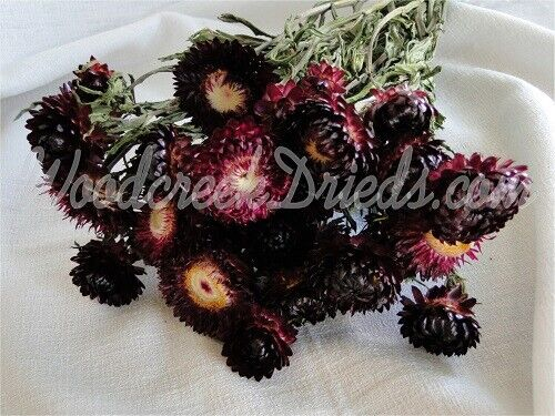 STRAWFLOWERS ~ PURPLE - natural air dried flower on stems, 2019 harvest!