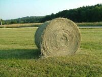 Hay bales and oat bales