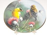Bird Collector Plates