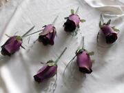 Purple Buttonholes