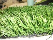 Artificial Lawn 3M