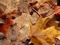 ramassage de feuille automne et coupe gazon reste de saison