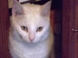 "Adult Female Cat: ""Pearl"""