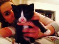 """Baby Male Cat - Domestic Short Hair-black and white: """"Bubbles"""""""