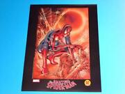 Spiderman Lithograph