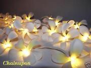 Frangipani Lights