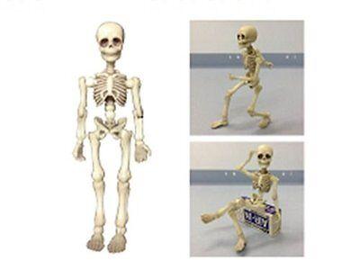 Model_kits Pose skeleton man FREE SHIPPING SB
