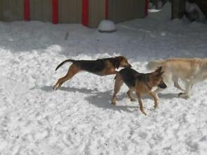 """Adult Female Dog - Hound: """"Maggie"""" Cambridge Kitchener Area image 2"""