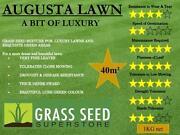 Luxury Grass Seed
