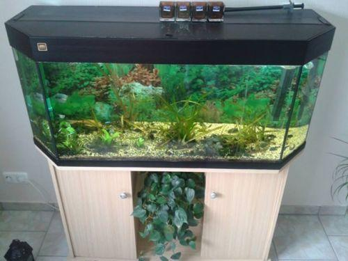 sechseck aquarium aquarien ebay. Black Bedroom Furniture Sets. Home Design Ideas