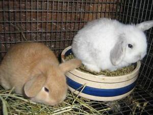 bébés lapins à vendre