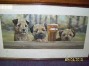 Paul Doyle Border Terrier