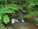 a.woodland.stream