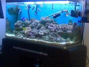 Marine Tank Set Up
