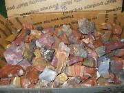 Petrified Wood Pieces