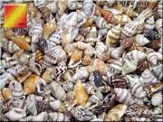 Tiny Sea Shells