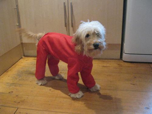 Waterproof Dog Coat Ebay