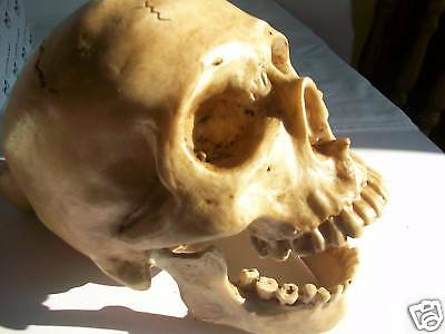 Human Skull Model with Hinged Jaw - Stage Prop or Ornament - Spooky & Weird Gift