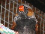The Finch Fanatic