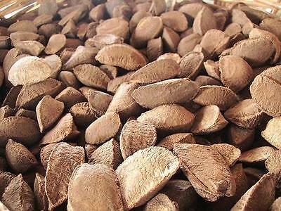 In Shell Brazil Nuts - 5 lb. - Treasured Harvest Brand