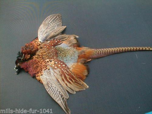 Taxidermy Bird Skins Ebay