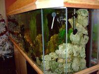 aquarium with tropical fish over 1000 liters plus filter 150 liters