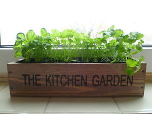 Kitchen Herb Pots | eBay