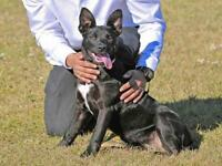 "Young Female Dog - Pit Bull Terrier: ""MISS PEPPER"""