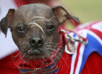 Mugly, the ugliest hound in Britain, found love and got married