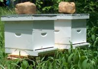 Land for Beehives