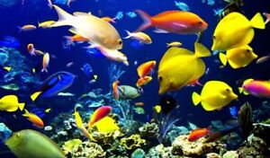 Looking for any Fish for Rehoming!