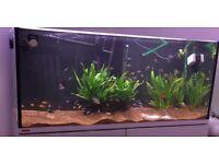 Jbl manado aquarium plant substrate