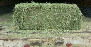 Horse hay for sale-squares $5/bale