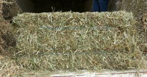 Premium Horse Feed - Not cattle grass.