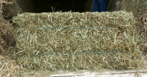 Square hay for Sale