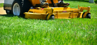 Lawn & Landscaping / Spring Clean Up