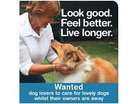 If You Love Dogs, Then Read On . . . . .