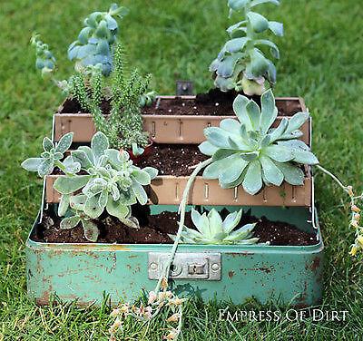 Pflanzen wachsen in den ungewöhnlichsten Behältnissen!