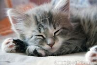 Adorable male kitten looking for his forever home.