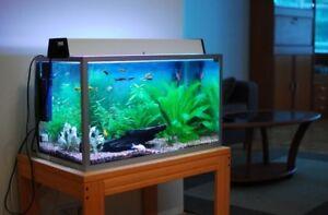 Fish Tanks/Accessories