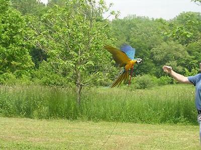 Parrot Bird Pet Aviator Harness Flight Line