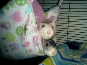 "Young Female Small & Furry - Rat: ""Celeste & Diana"""